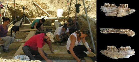 imagen de  Investigadores trabajan en el yacimiento de Barranc de la Boella. A la derecha, mandíbula de rinoceronte encontrada.