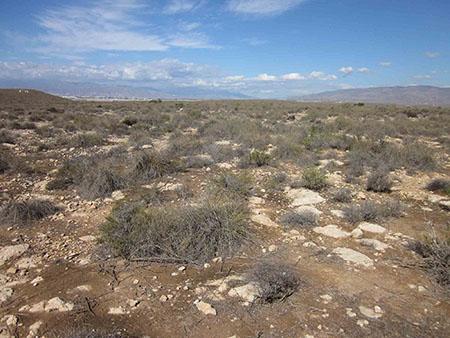 imagen de Espartal semiárido estudiado por los investigadores en Almería. / Francisco Domingo