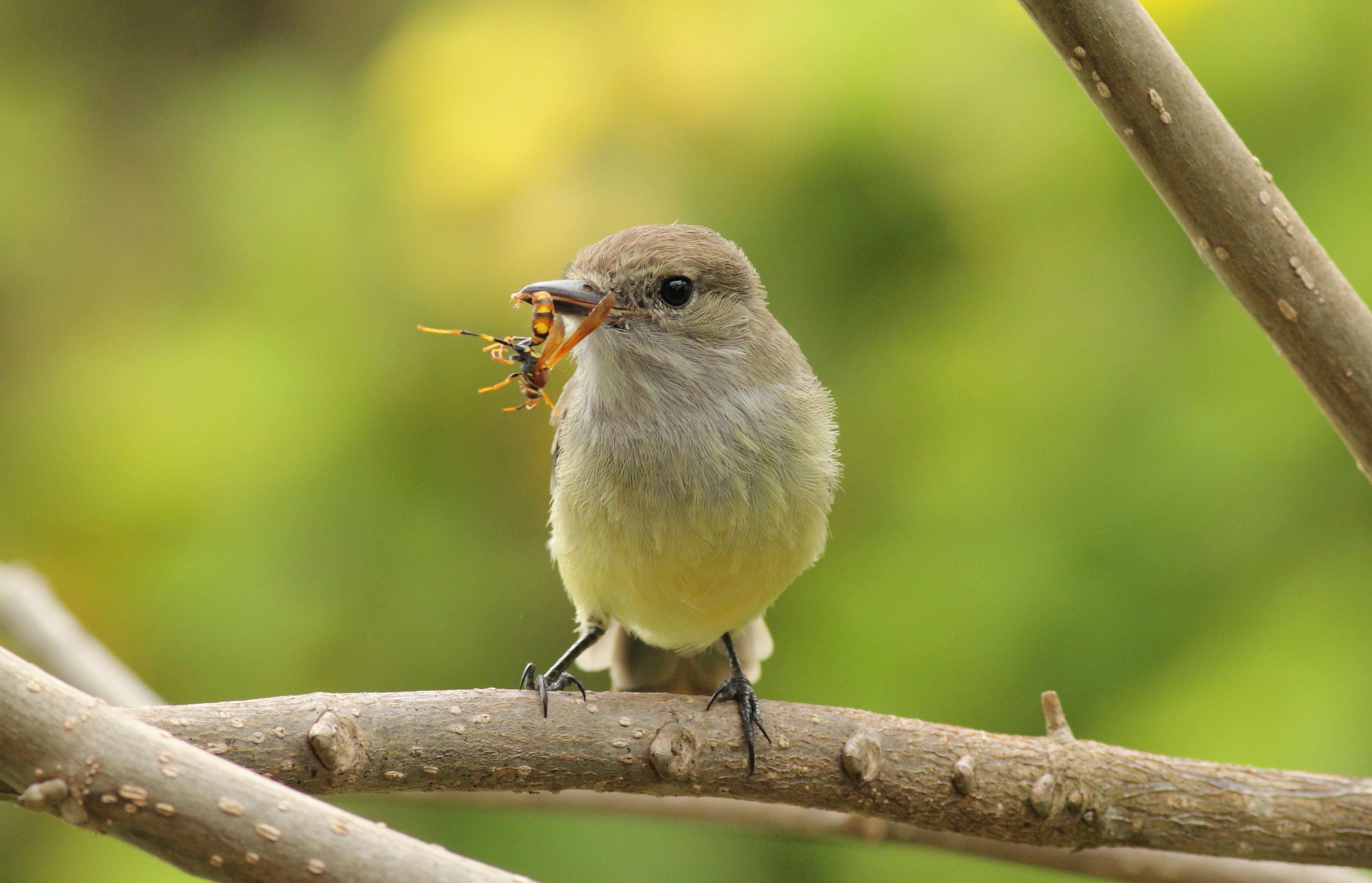 imagen de Las interacciones entre especies sustentan la vida en el planeta./ RUBÉN HELENO