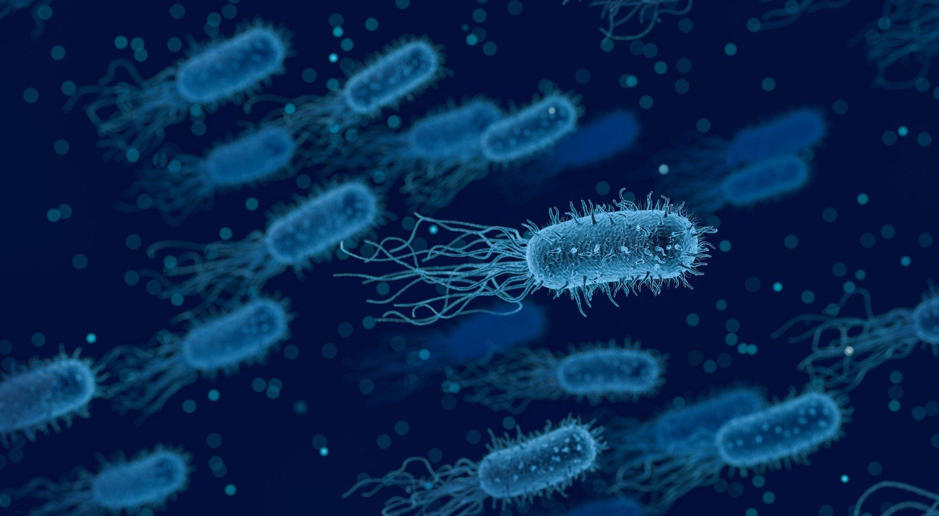Descubierto un nuevo mecanismo de defensa celular frente a infecciones víricas y bacterianas