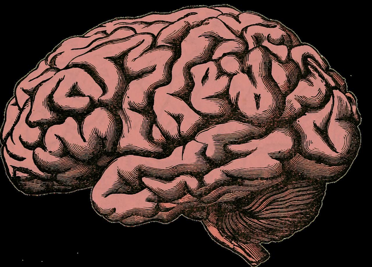 imagen de El hipocampo, una estructura del cerebro clave para funciones tan importantes como la orientación o la memoria, se sirve de un mecanismo para segregar o integrar procesos basado en la coexistencia de diferentes patrones de ondas lentas y rápidas./ PIXABAY
