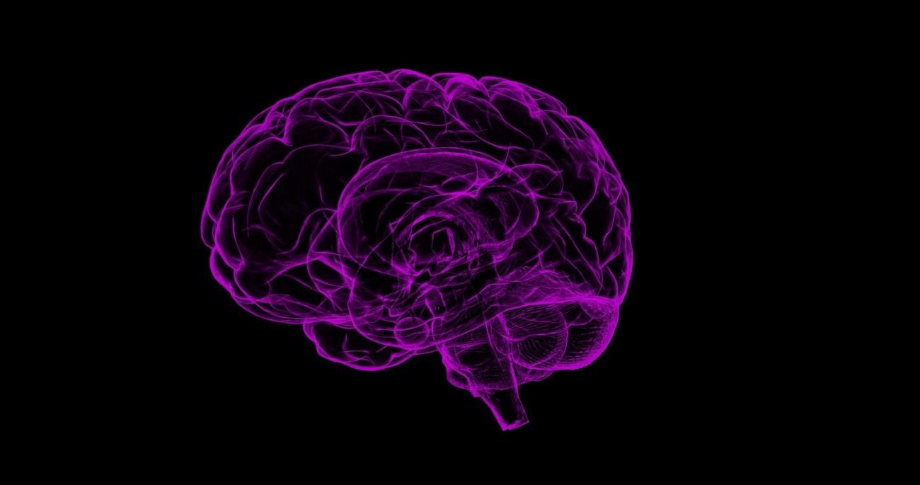 imagen de El alcohol activa las células del sistema inmune que residen en el cerebro, que cambian su forma y características bioquímicas. / Pixabay