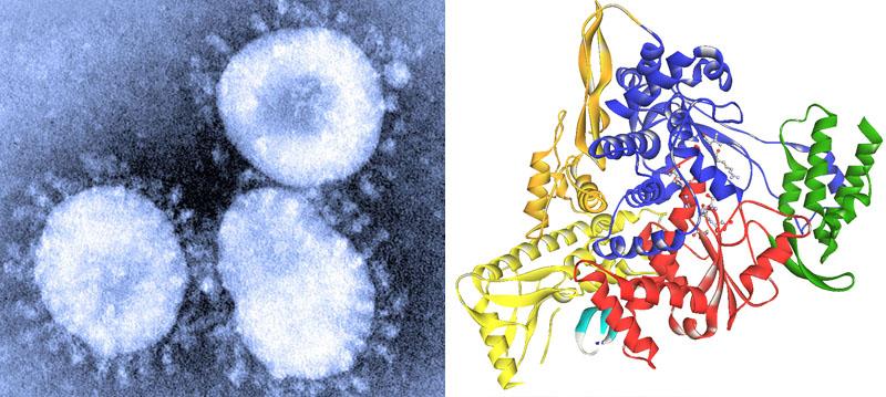 Virus y proteína