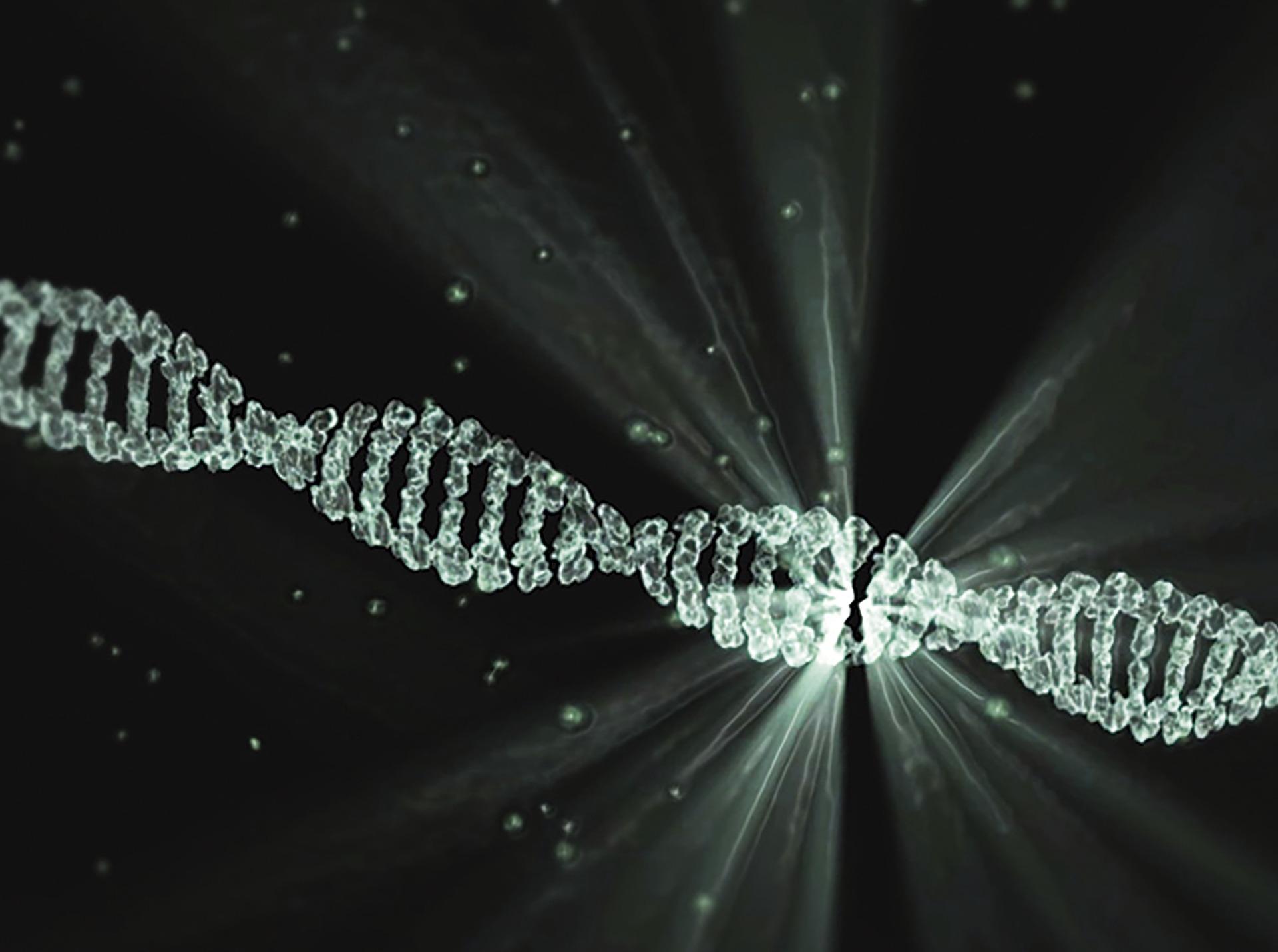 imagen de La enzima XPG interviene en el proceso de reparación del ADN. / Pixabay