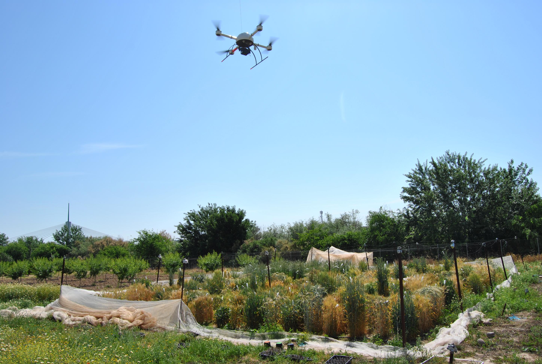 imagen de El dron sobrevolando los cultivos durante los experimentos./ IAS-CSIC
