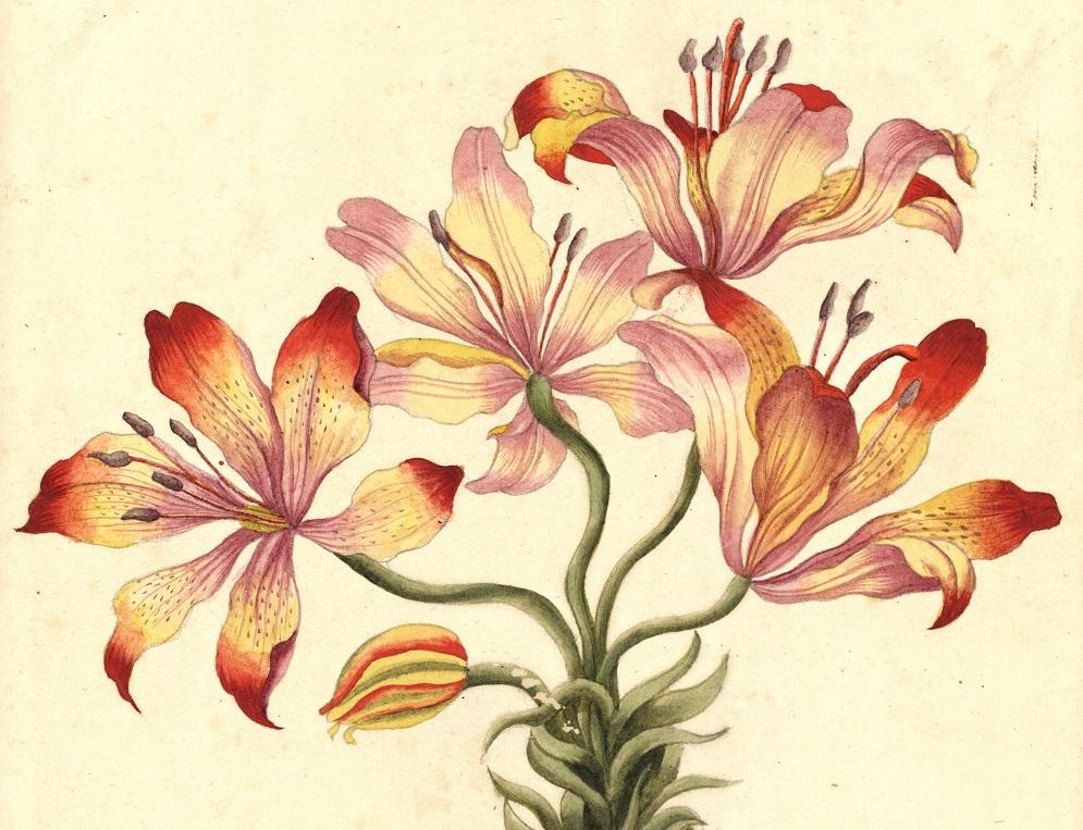 imagen de Uno de los dibujos que forman parte de la exposición 'Regnum vegetabile'.