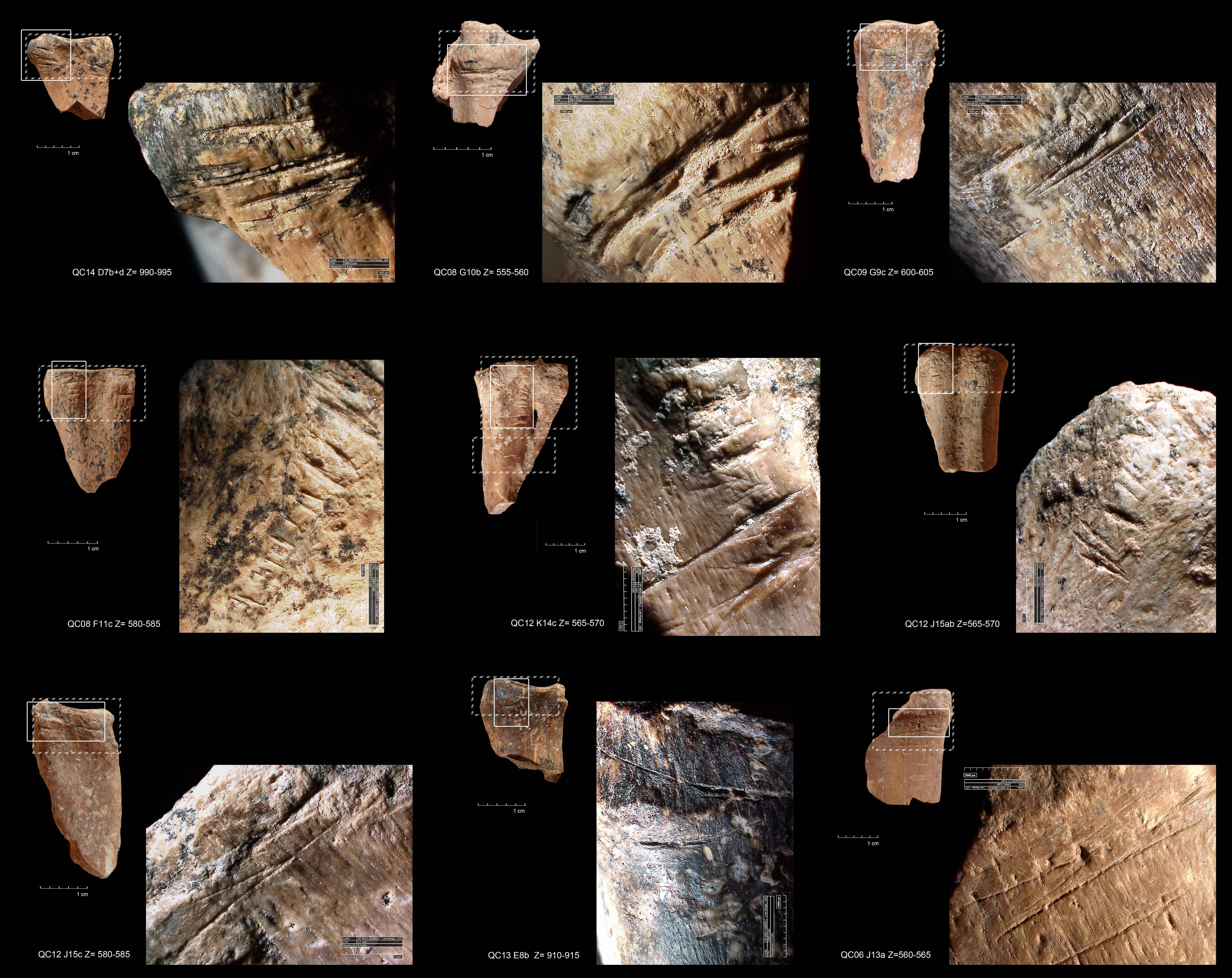 imagen de Incisiones transversales en huesos de gamos de la cueva israelí de Quesem. / Ruth Blasco