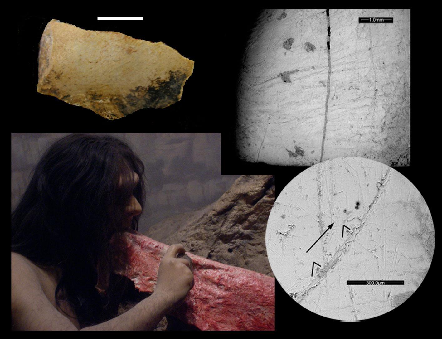 imagen de Foto 3: Neandertal realizando el gesto de 'agarra y corta', cuchillo lítico y detalle de las estrías culturales en las piezas dentales./ Grupo de Paleoantropología MNCN-CSIC