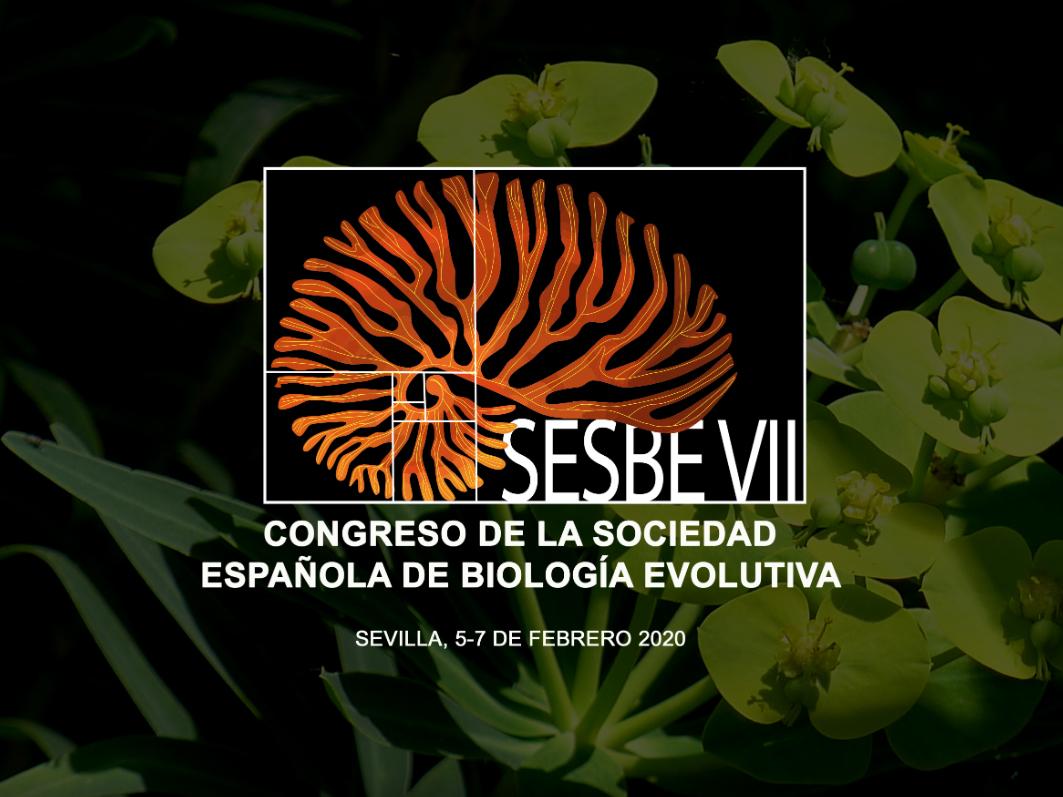 Imagen SESBE VII 2020