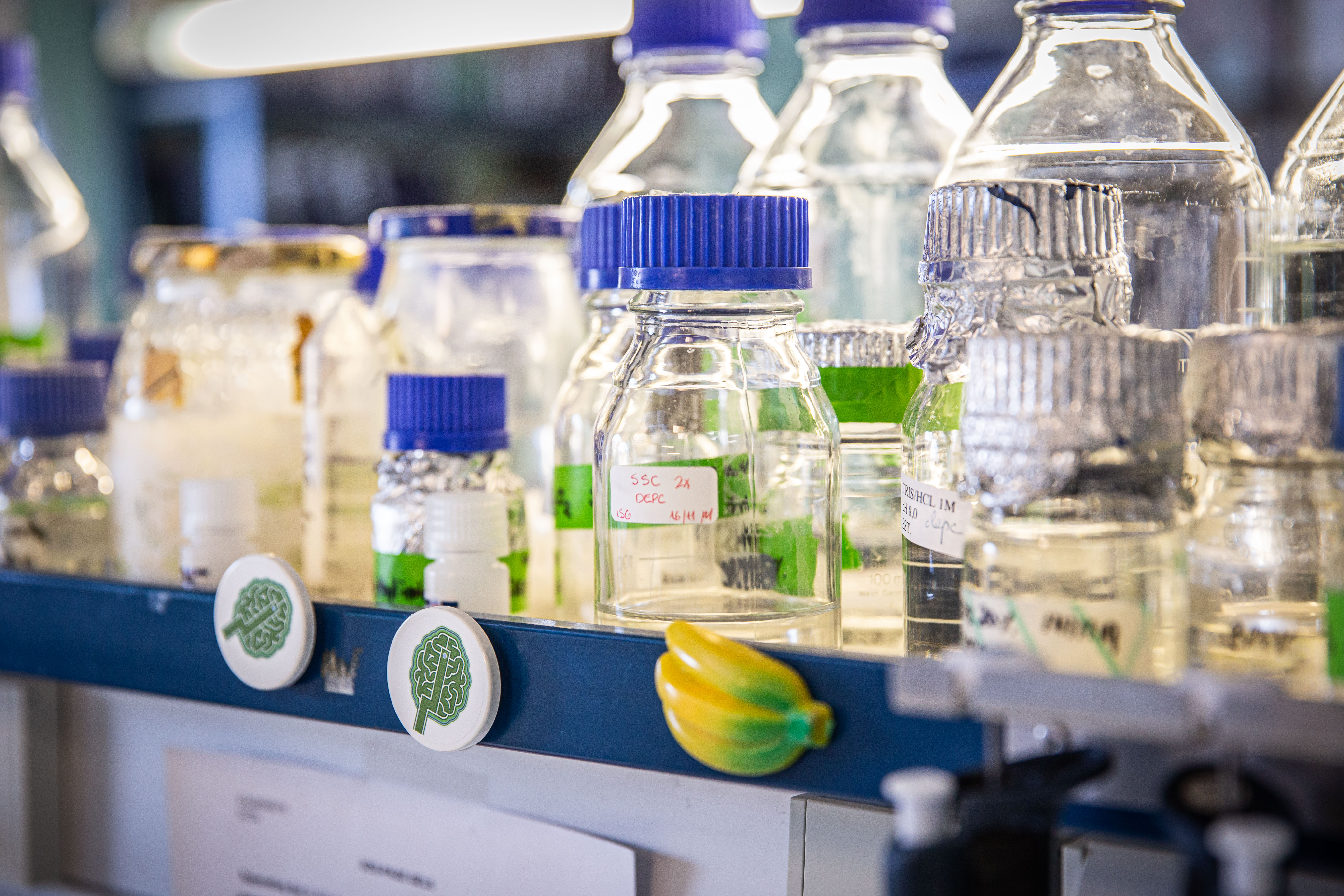 imagen de Laboratorio de coronavirus del CNB-CSIC. / Foto: Agencia SINC