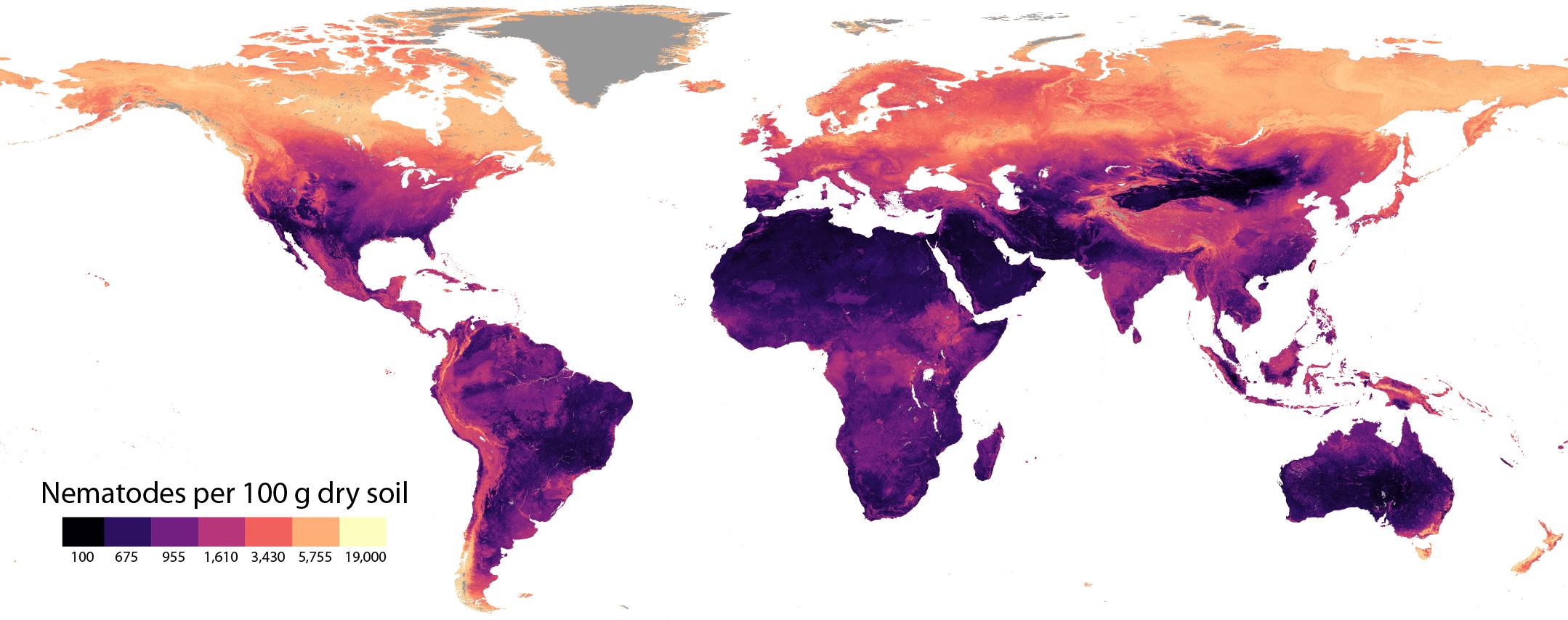 imagen de Distribución global de nematodos por 100 gramos de suelo seco./ CSIC