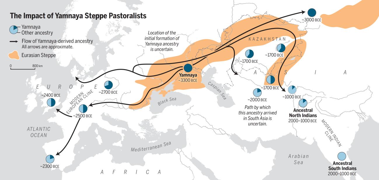 imagen de Impacto de las migraciones de los pueblos yamnaya. / Oliver Uberti y Science