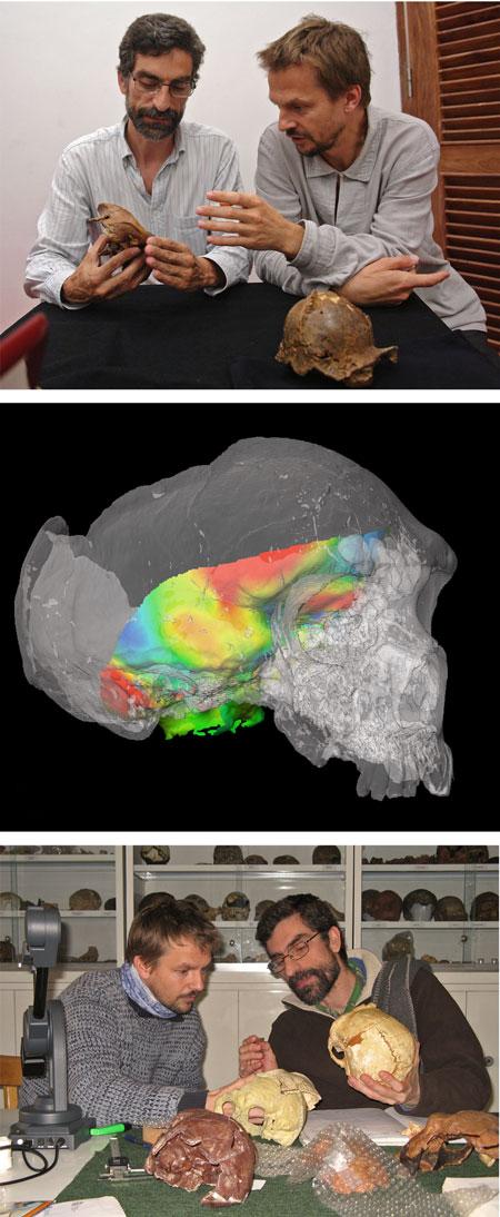 imagen de Los investigadores del CSIC Antonio Rosas, con gafas, y Markus Bastir, del Grupo de Paleoantropología del MNCN-CSIC. En el centro la reconstrucción de la base del encéfalo (zona coloreada) de un Neandertal. Firma:Grupo de Paleontología MNCN-CSIC y Laboratorio de morfometría 3D