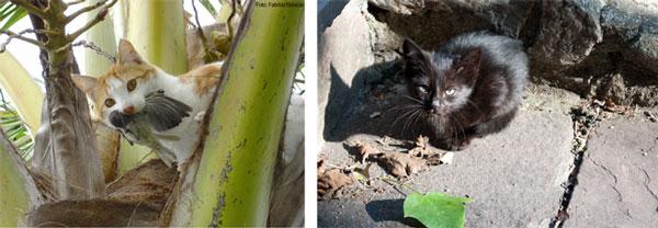 imagen de Gatos asilvestrados. / Fabrice Brescia/ CSIC Comunicación
