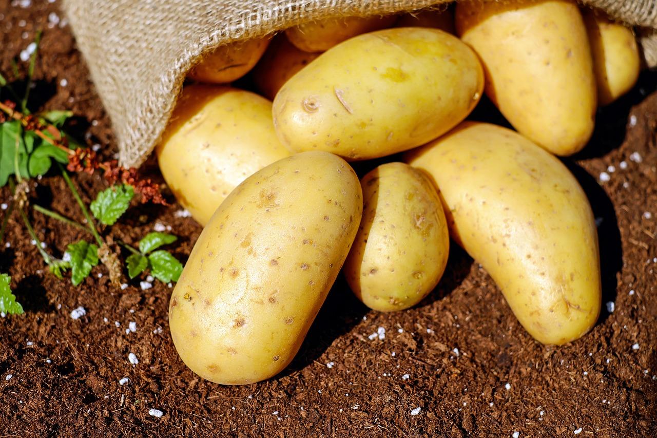 imagen de Hasta ahora, el origen de la patata se había documentado únicamente utilizando aproximaciones históricas./ PIXABAY