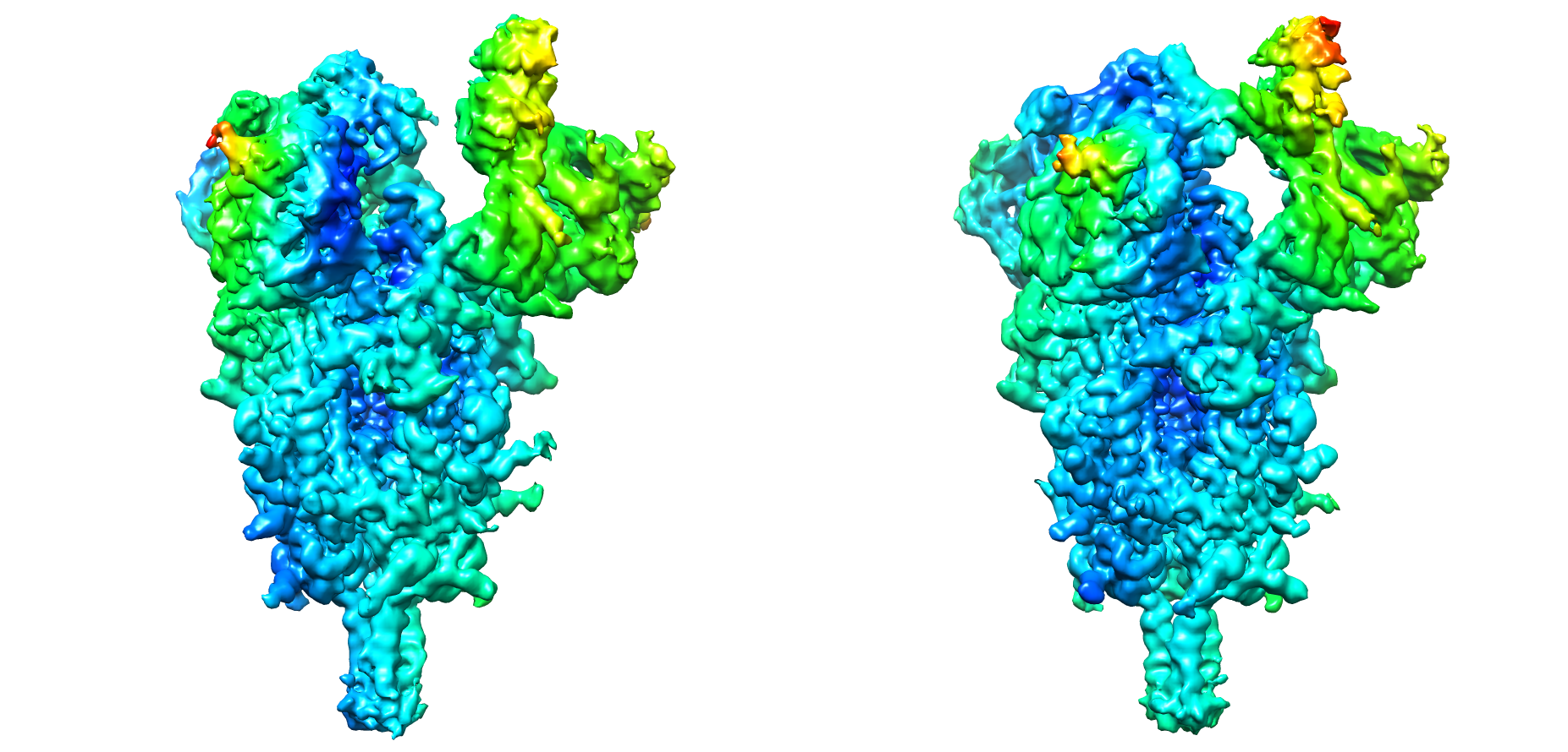 imagen de Distintas conformaciones que adopta la espícula del SARS-CoV-2. Los colores corresponden a distintos niveles de tensión (stress) estructural, desde zonas muy estables (en azul) hasta muy inestables (en rojo), pasando por zonas de tensión intermedia (en verde) / CNB-CSIC