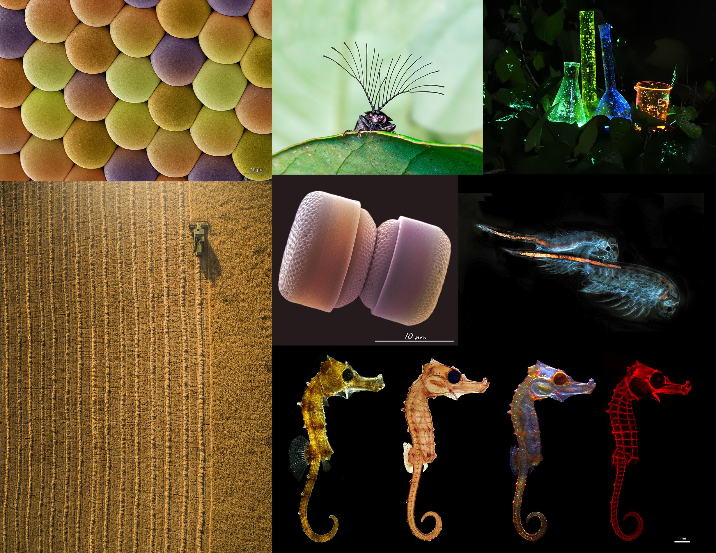 imagen de Las siete imágenes seleccionas en la 17ª edición de FOTCIENCIA./ CSIC/ FECYT