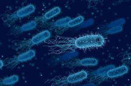 El estudio abre nuevas vías terapéuticas en la lucha contra las bacterias superresistentes. / PIXABAY