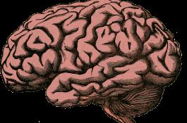 El hipocampo, una estructura del cerebro clave para funciones tan importantes como la orientación o la memoria, se sirve de un mecanismo para segregar o integrar procesos basado en la coexistencia de diferentes patrones de ondas lentas y rápidas./ PIXABAY