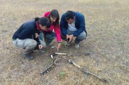 examinando_los_huesos_de_un_ciervo.jpg