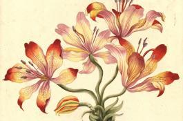 Exposición de ilustraciones botánicas