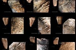 Huesos de gamos de la cueva israelí de Quesem