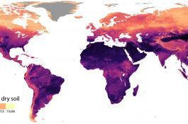 Distribución global de nematodos por 100 gramos de suelo seco./ CSIC