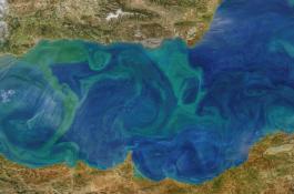 Fitoplancton en el Mediterráneo occidental. La imagen fue captada el 11 de marzo de 2020 por el sensor MODIS a bordo del satélite Aqua de la NASA./ Norman Kuring, web OceanColor de la NASA