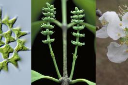 plantas_secuenciacion