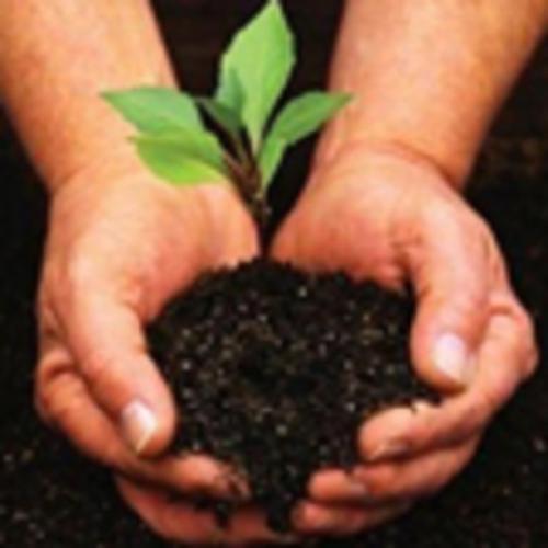 Día Internacional de Fascinación por las Plantas