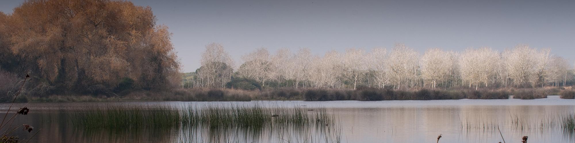 Reserva Biológica de Doñana