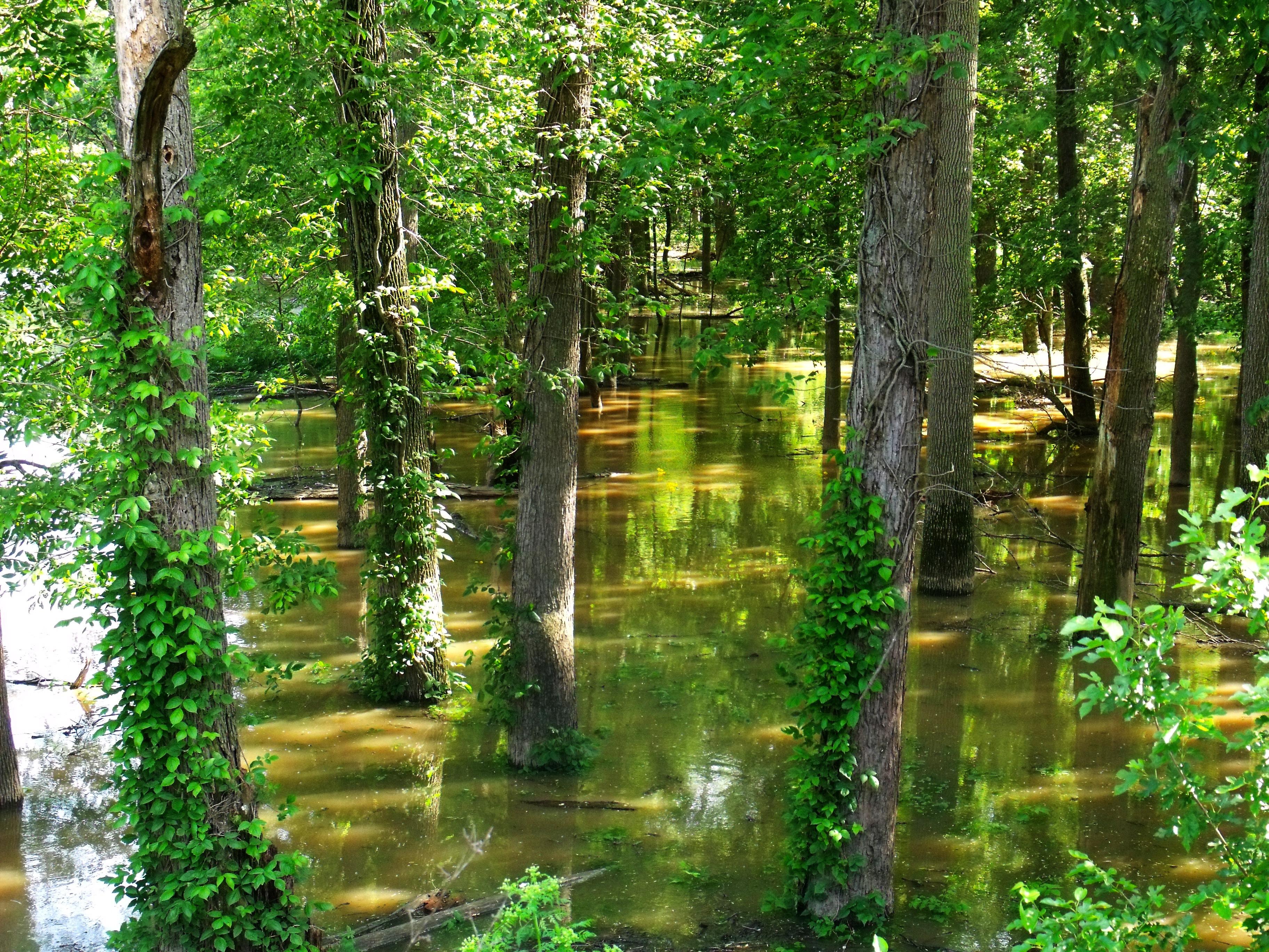 Bosque fluvial