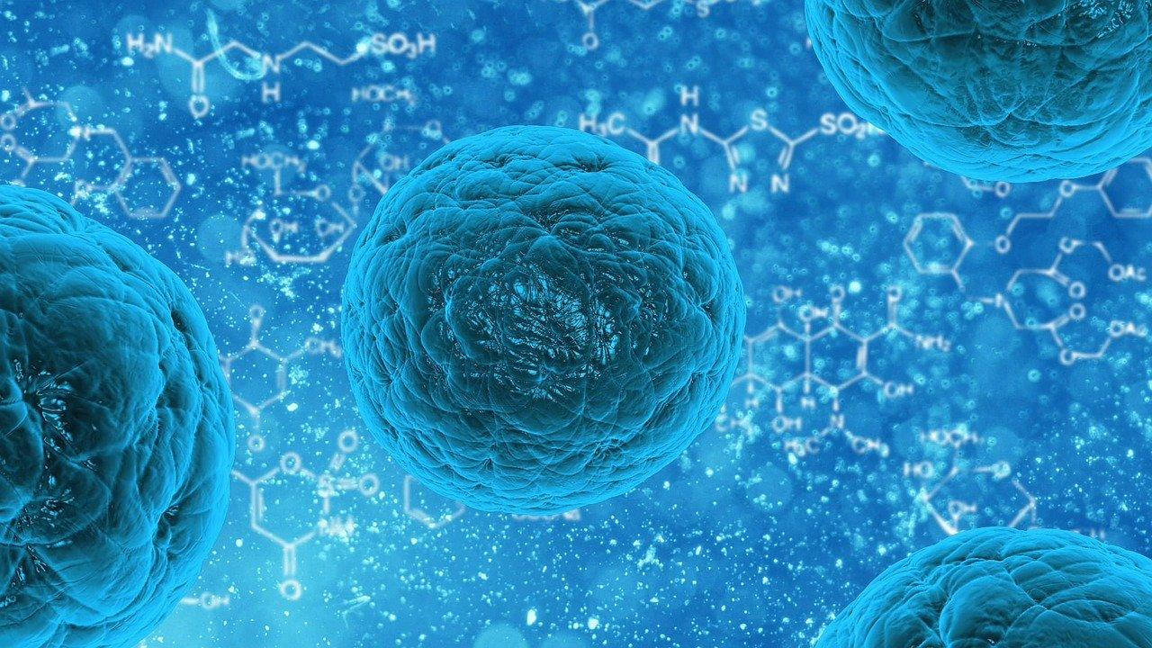 La capacidad de algunas bacterias de producir esterol da pistas sobre la evolución de nuestras propias células./ PIXABAY