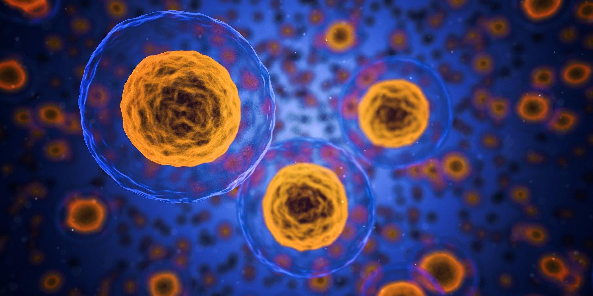 imagen de Un proyecto del CSIC estudia aplicar antitumorales para frenar el coronavirus en el interior de las células. / Pixabay