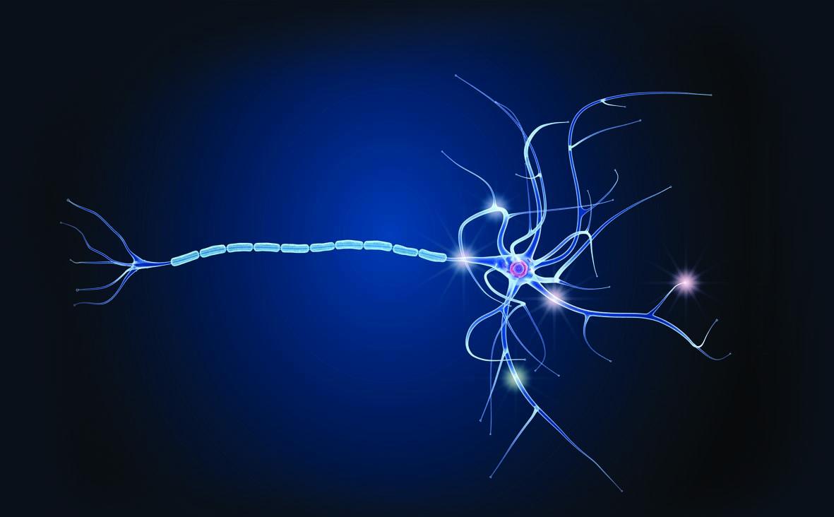 imagen de La esclerosis múltiple afecta a 700.000 personas en Europa. En España, la incidencia es de 100 casos por 100.000 habitantes, en su mayoría mujeres. / CSIC-Catarata