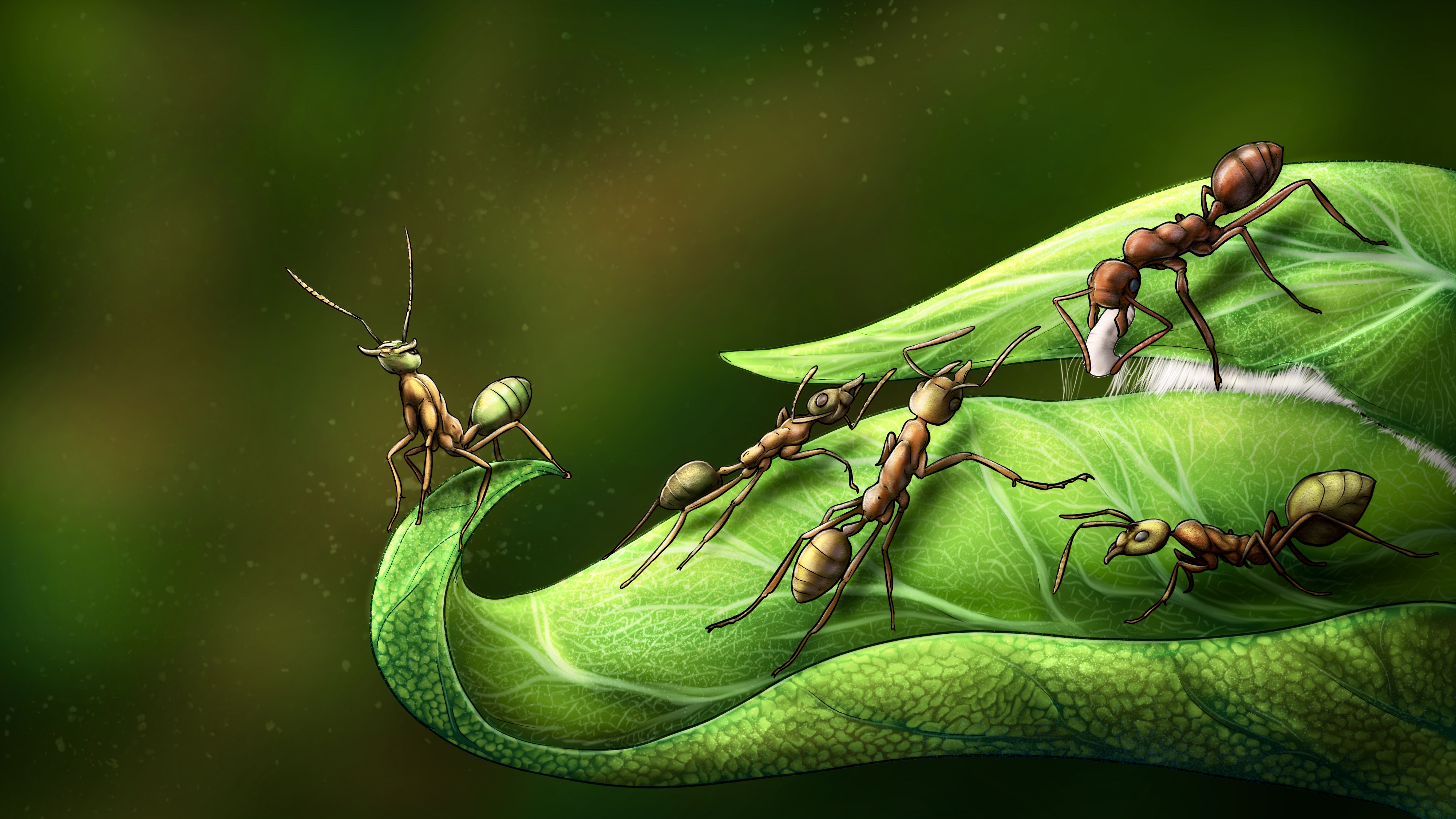 imagen de Las hormigas tejedoras del género Oecophylla utilizan sus propias larvas para unir los extremos de las hojas mediante la seda que estas producen. / Sergio Ibarra Mellado