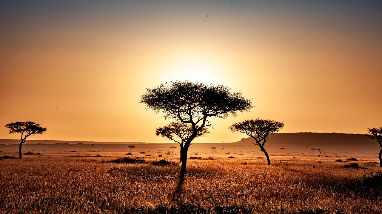 Una plantación masiva de árboles en pastizales y sabanas, aparte de los problemas para la biodiversidad, generaría unos paisajes muy homogéneos e inflamables./ PIXABAY