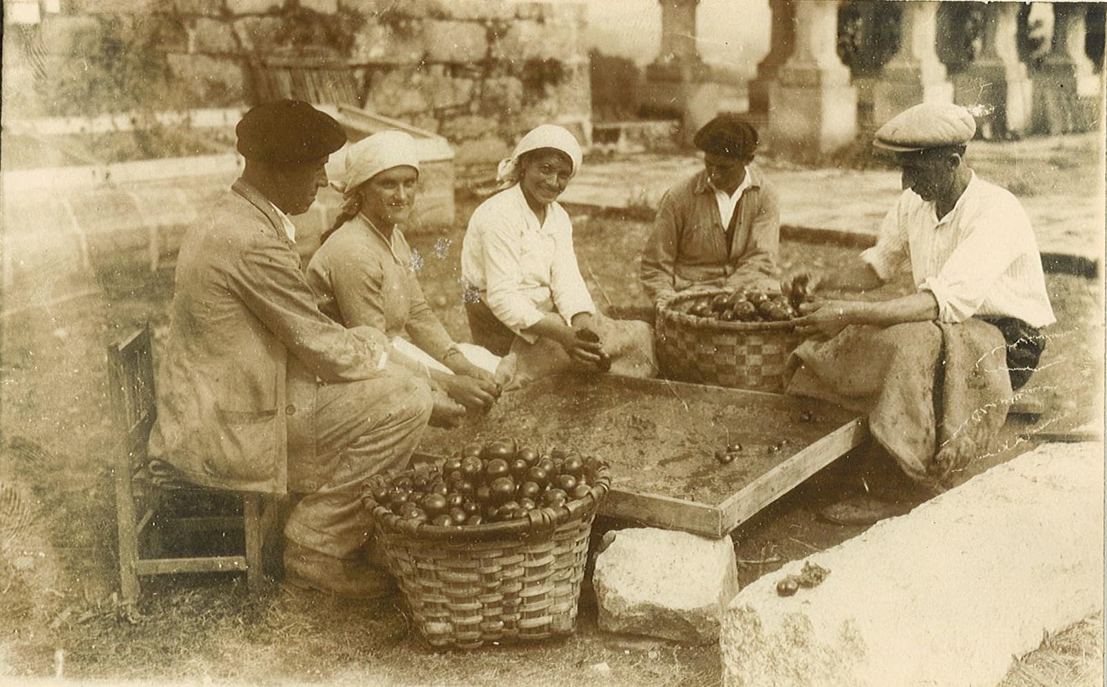 imagen de Trabajadores de la MBG separando la semilla del tomate de la pulpa. / MBG-CSIC