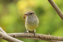Las interacciones entre especies sustentan la vida en el planeta./ RUBÉN HELENO