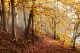 Los tiempos de permanencia del carbono en la vegetación se están acortando por factores como el calentamiento y las sequías./ PIXABAY