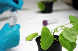 Investigacion_plantas