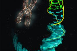 Imagen ilustrativa de la estructura de la unión del i-ADN (bases en verde) con el B-ADN (azul). / IQFR-CSIC