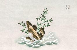 laminaria_japonica_web2.jpg