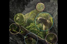 mamiferos_web.jpg